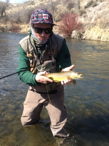 Weber fish report brighton anglers for Weber river fishing report
