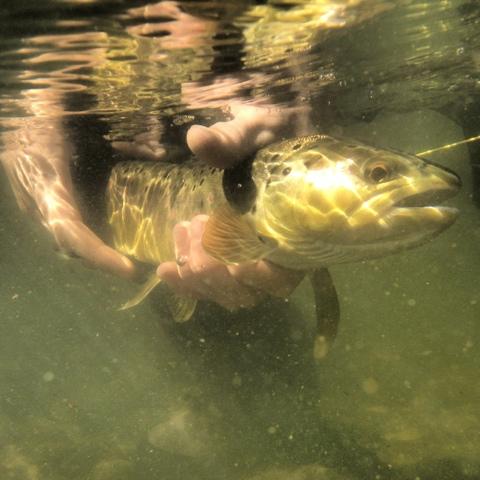Weber fish report