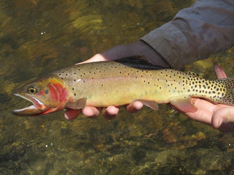 Utah Summer Fishing In April