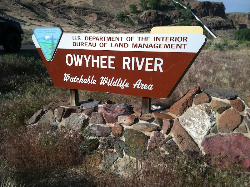 Oregon Fly Fishing Owyhee River