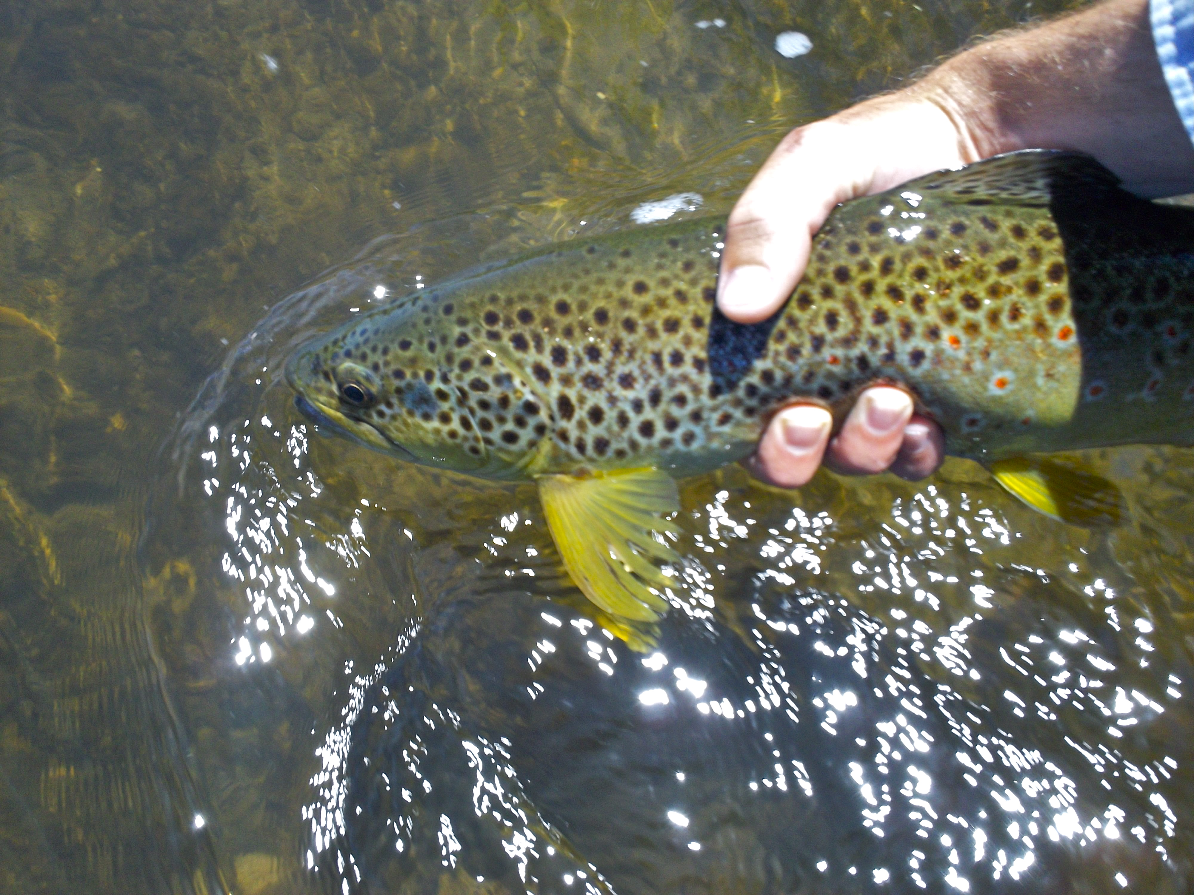 Fishing green drakes!