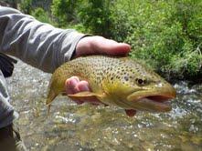 Fishy1